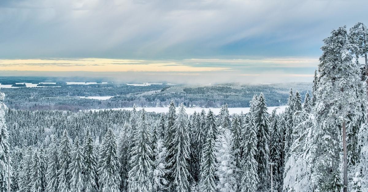 Finlande - montagne - forêt - neige