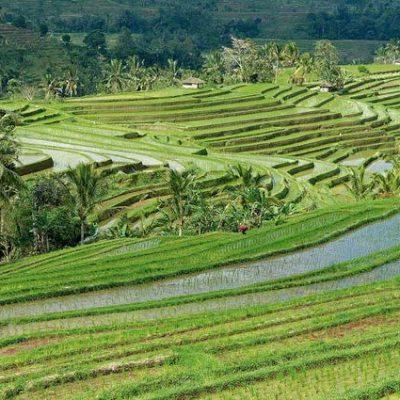 Bali Lktours